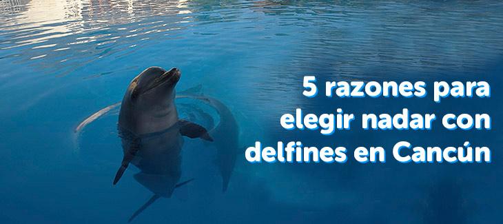 5 razones para elegir nadar con delfines en Cancún