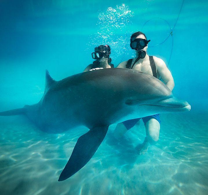 ¿Nado con Delfines en Ventura Park?