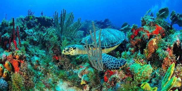 Tortuga marina en Akumal